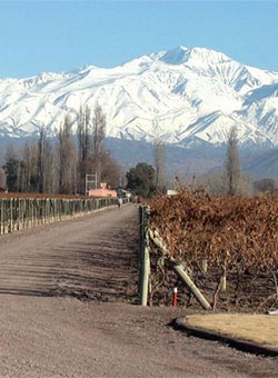 Mountains set behind an Argentinian vineyard - Argentina Wines