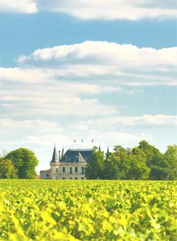 A vineyard in Bordeaux - Bordeaux Wines