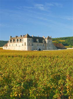 A vineyard in Burgundy - Burgundy Wines
