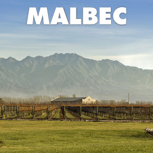 Malbec at WineDeals.com