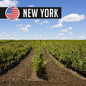 Wines of New York Wines at WineMadeEasy.com