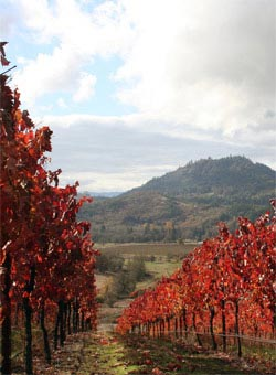 A vineyard in Oregon - Oregon Wines