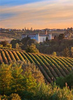 A vineyard in Piedmont - Piedmont Wines