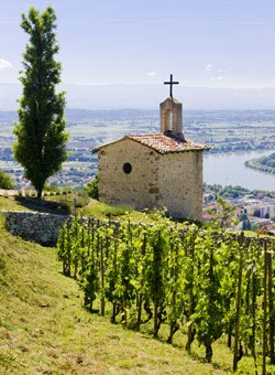 Rhone Valley Wines - Amazing wines from France!
