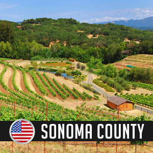 Wines of Sonoma County at WineDeals.com