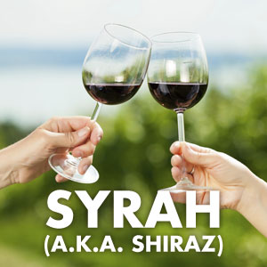 Syrah/Shiraz at WineDeals.com