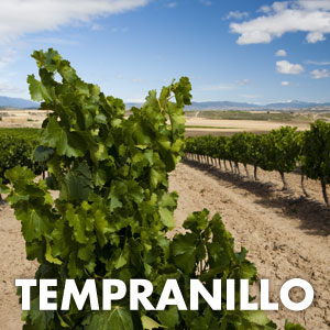 Tempranillo at WineMadeEasy.com