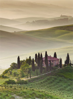 A vineyard in Tuscany - Tuscan Wines