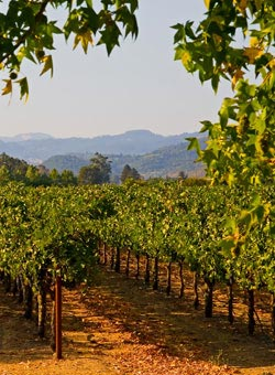 A California vineyard - US Wines