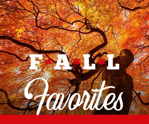 Fall Favorites are Here! | WineDeals.com