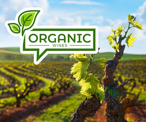 Organic Wines | WineTransit.com